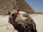 Joe Camel