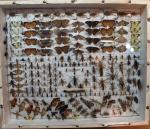 Afghan Entomology