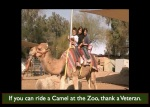 camelzoovet.001
